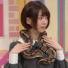 橋本奈々未のヘビ夫人登場!